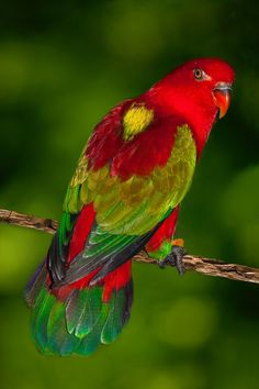 Most Beautiful Birds, Pretty Birds, Colorful Parrots, Colorful Birds, Parrot Bird, Owl Bird, Bird Costume, Australian Birds, Cute Animal Pictures