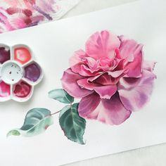 Katya Rozz (@katya.rozz) в Instagram: #rose #art #watercolor #painting #paint #pink #watercolour #draw #drawing #flower #flowers #цветы #watercolor #watercolour #aquarelle #waterblog #worldofartists #drawing #painting #art #artist #artshelp #artgallery #artweinspire #topcreator #inspiringwatercolors #inspiration #flowers #botanical #botanicalart #illustration #акварель #вдохновение #иллюстрация #pink