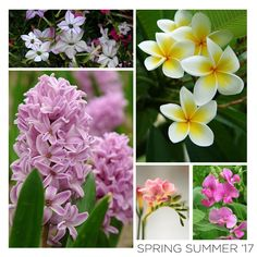Inspiration for our SS'17 Collection. The flowers for our five new floral fragrances in full bloom.   #SpringSummer2017 #NewCollection #Floral #Flowers #Fragrance #Candles #Freesia #Nicotiana #Hyacinth #SweetPea #Exotic #Frangipani #Niana #NianaCandles #FloralDelight #HandCrafted #SpringSummer #EcoFriendly  #ScentedSoyCandles #Summer #HomeFragrance