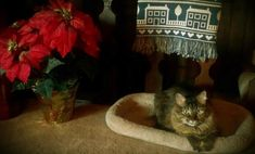5 Tips for Keeping Your Cats Safe Over the Holidays | Catster