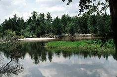 Floridian Nature: Floridian Nature Spot of the Week: Blackwater Rive...
