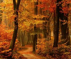 Autumn Path, The Netherlands photo via meretric