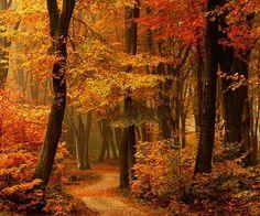 Autumn Path, The Netherlands photo via meretric