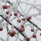 Frozen von Jasardpu