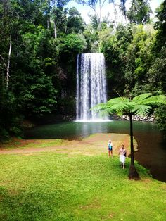 Millamilla Falls,North Queensland, Australia Atherton Tablelands, Travel Bugs, Places Ive Been, The Good Place, Waterfall, To Go, Queensland Australia, World, Holiday