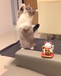 These cute kittens will warm your heart. Cats are awesome friends. Cute Funny Animals, Cute Baby Animals, Animals And Pets, Funny Cats, Cute Cats And Kittens, I Love Cats, Kittens Cutest, Cute Animal Videos, Funny Animal Pictures