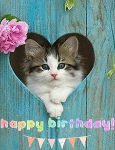 via GIPHY gif painted fence with heart opening, cat lays in opening of heart. Happy Birthday Cat Images, Happy Birthday Kitten, Birthday Greetings Images, Cat Birthday Wishes, Happy Birthday Animals, Happy Birthday Greetings Friends, Happy Birthday Vintage, Birthday Wishes Flowers, Happy Birthday Celebration