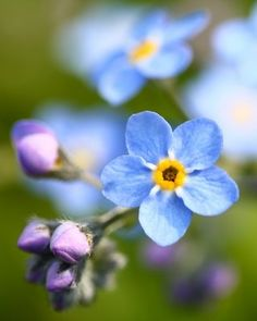 Forget me not: Forget not to have patience with yourself... Forget not that the Lord loves you.