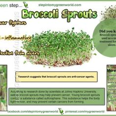 Broccoli Sprouts Food Tips, Food Hacks, Growing Sprouts, Broccoli Sprouts, Sprouting Seeds, I Care, Clean Recipes, Fruits And Veggies, Hydroponics
