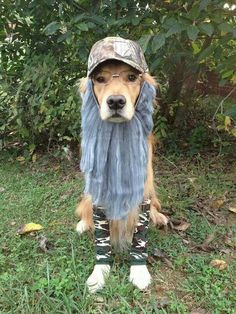 Duck Dynasty... OMG I love this!!! Pet Accessories, Dog Toys, Cat Toys, Pet Tricks