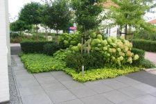 Voortuin met groenblijvende bodembedekker