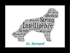 Traits of the St. Bernard In the 1600s, large dogs arrived at the St. Bernard Hospice, a refuge for travelers crossing between Switzerland and Italy. The dogs were originally used to pull carts and tu