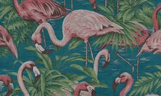 Venus Williams is a force on the court and an emerging star in interior design, she shares a few favorites in Friday Five on Design Milk. Wallpaper Online, Vinyl Wallpaper, Arte Wallcovering, Washable Wallpaper, Tropical Wallpaper, Palm Wallpaper, Flamingo Wallpaper, Tropical Animals, Flamingo Pattern