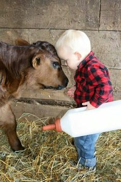 "Little Boy says to ""Carl"" The Calf: ""Now listen to me young 'Carl' I'm The Boss of you, and I'm telling you to drink this milk so you can grow just as big, and as strong: Like me!"""