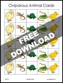 Oviparous Animals Count, Tally, and Graph FREEBIE for #preschool and #kindergarten