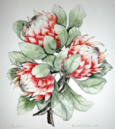 """Protea-Nationalblume Südafrikas"" by Maria Inhoven, Plants: Flowers, Nature: Miscellaneous, Painting Protea Art, Protea Flower, Plant Illustration, Botanical Illustration, Botanical Drawings, Botanical Prints, Watercolor Flowers, Watercolor Art, Bright Art"