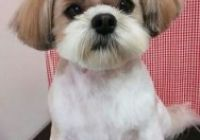 Shih Tzu Frisuren Lovely 82 Best Shih Tzu Grooming Hairstyles Images In 2019 Shih Tzu, Ideal Image, Hair Images, Cool Photos, Photo Galleries, Hairstyles, Haircuts With Bangs, Hairdos