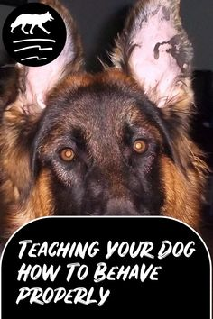 So Many Tricks To Teach Your Dog ** Check out the image by visiting the link. Dog Flea Treatment, Easiest Dogs To Train, Dog Care Tips, Dog Training Tips, Pet Store, Happy Dogs, Dog Owners, Best Dogs, Dogs And Puppies