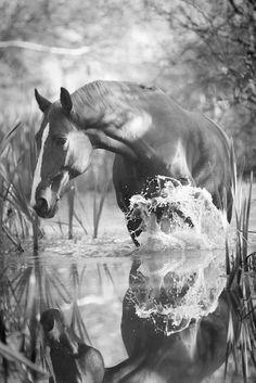 Noble Beauty Reflecting...