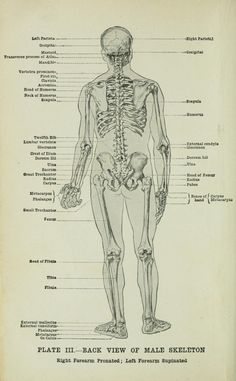 Human anatomy for art students by Fripp, Alfred Downing (1865)