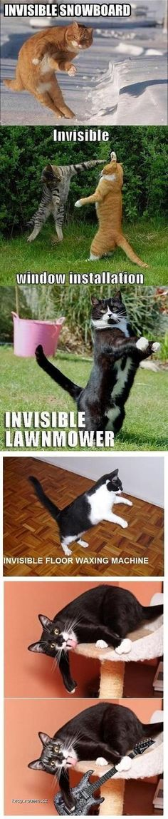 Cats & invisibility                                                                                                                                                                                 More #CatMemes