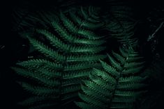 Dark ferns in the forest Photo Background Images, Background For Photography, Photo Backgrounds, Forest Photography, Landscape Photography, Travel Photography, Forest Landscape, Abstract Landscape, Landscaping Images