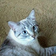 My man cat - Zeke! AKA: Z-Man Mini-Man