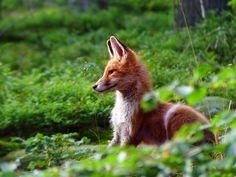 #foxgirlproblems