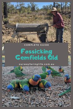 Want to find your fortune? Try fossicking for sapphires on the Gemfields QLD. Our guide gives you all the information you need. Gold Prospecting, Queensland Australia, Where To Go, Road Trips, Travel Guides, Places To See, Finding Yourself, Gems, Metal