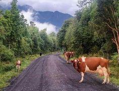 carretera austral Sur de Chile South America, Landscapes, Creativity, Traveling, Wanderlust, Culture, Adventure, Country, Inspiration