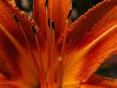 Free HD Wallpapers for your computer: Orange Flower 4k Wallpaper For Mobile, Widescreen Wallpaper, Free Hd Wallpapers, Orange Wallpaper, Flower Wallpaper, Cool Wallpaper, Hd Flowers, Orange Flowers, Light Orange