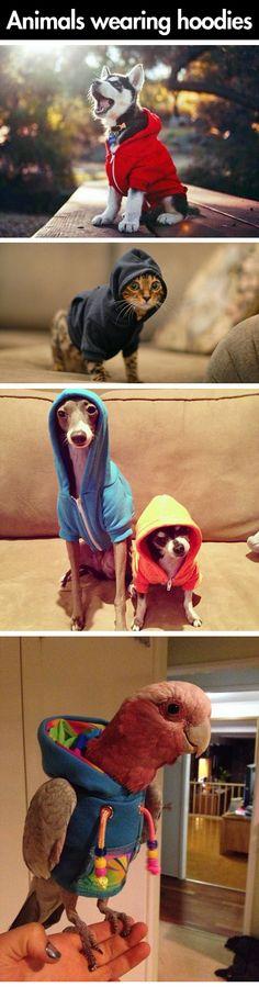 Hoodies make everything better…
