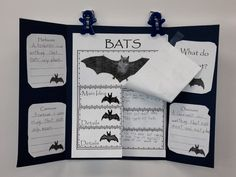 Spiders and Pumpkins, and Bats. Elementary Science, Science Classroom, Science For Kids, Classroom Themes, Classroom Activities, Science Ideas, Teaching Aids, Teaching Reading, First Grade Themes