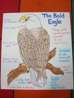 Bald Eagle poster I made for American symbols unit. (I traced the eagle by using the document camera to project it onto the wall) 5th Grade Social Studies, Social Studies Activities, Teaching Social Studies, Teaching Art, Teaching Ideas, American Symbols, American History, Eagle American, Glad Strategies