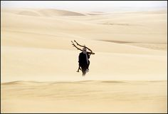Touareg searches for wood in the Tenere Desert, Niger. Image credit: Alessandro Vannucci.