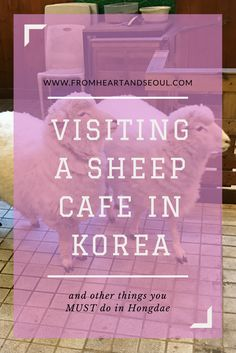 Spend the day in Hongdae - Seoul's trendy arts district. Visit a sheep cafe, grab a Hello Kitty themed coffee, and check out a street performance or a wall mural. Promise you won't get bored!