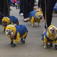 I will get a pug someday - it will wear this!!!