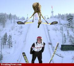 Opdracht creatief schrijven: Giraffe op ski's