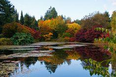 Autumn in Van Dusen Garden, Vancouver.  2011