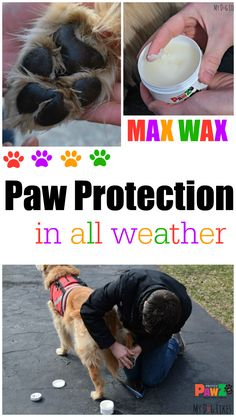 Extreme temperatures, chemical ice melts, and pesticides can damage your dog's sensitive paws. See how Max Wax by @pawzdogboots keeps your dog's paws protected from the elements. Full review and application tips from @MyDogLikes.