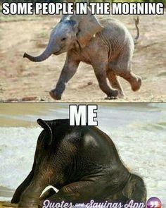 Lustige Tiermemes - Funny animal memes make me laugh - Funny Animal Jokes, Cute Funny Animals, Funny Animal Pictures, Cute Baby Animals, Funny Cute, Funny Dogs, Cute Animal Quotes, Animal Funnies, Funny Dog Sayings