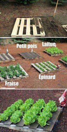 Wooden Pallet Vegetable Gardening 25 neat garden projects with wood pallets Easy DIY Garden Vegetable Garden Planner, Backyard Vegetable Gardens, Garden Landscaping, Garden Plants, Landscaping Ideas, Vegetable Ideas, Home Vegetable Garden Design, Backyard Farmer, Vegetable Farming