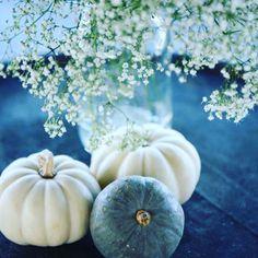 White pumpkins are so pretty!!!