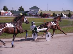 Lookslikefire driven by Charlie Myrick leads as Not To Be Denied follows in the 2nd division of the Doc Mairs Memorial Trot at the 2012 Wayne County Fair in Wooster, Ohio. Wooster Ohio, Wayne County, County Fair, Horse Racing, Division, Horses, Sweet, Animals, Image