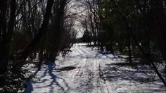 Scenes from Logan's Point, or presently known as Neshaminy State Park in Bensalem Twsp, formally Eddington, PA.