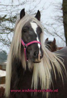 Most Beautiful Horses, All The Pretty Horses, The Barnyard, Draft Horses, Horse Pictures, Horse Breeds, Horse Love, Lizards, Horses