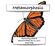Complete and Inplete Metamorphosis Venn Diagram   Science Classroom for elementary
