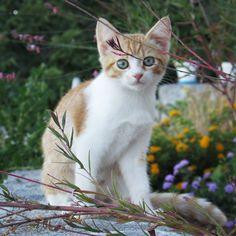 """""""Mi piace"""": 45, commenti: 5 - viper (@recursivepointer) su Instagram: """"#cat #cats #catlover #puglia #kitty #macchiadipele #catstagram #purr #instacat #catsofinstagram"""""""