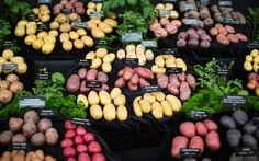 A few of the wide range of perfect potatoes on display