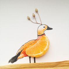Inspiration #animal #duck #ruddyshelduck #mandarine #drawing #draw_something #becreative #november #wednesday #paper #whitebackground #fruits #bird #notperfect #naturelovers #nature #dried #pocket_creative